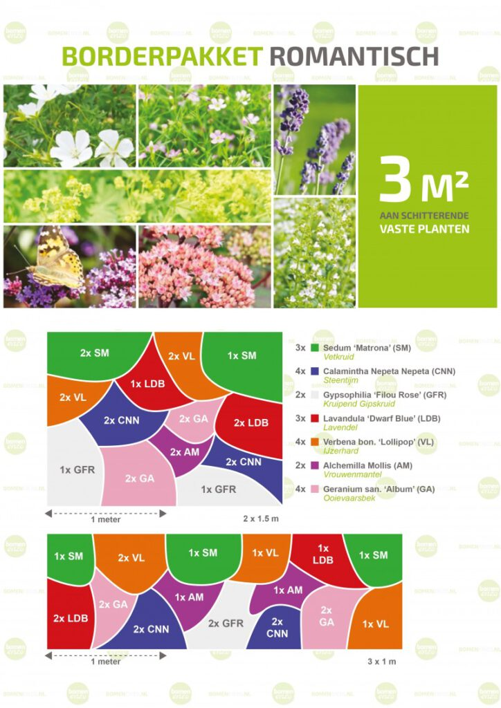 borderpakket vaste planten
